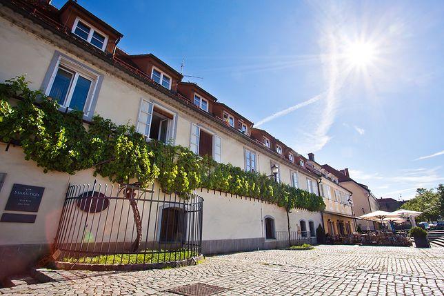 Stara Winorośl w Mariborze