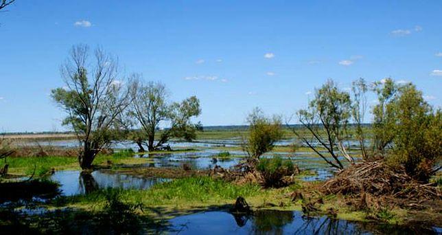 Lubuskie: Park Narodowy Ujście Warty
