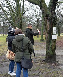 Warszawa. Karta Praw Drzew. Będzie obowiązek informowania o wycince