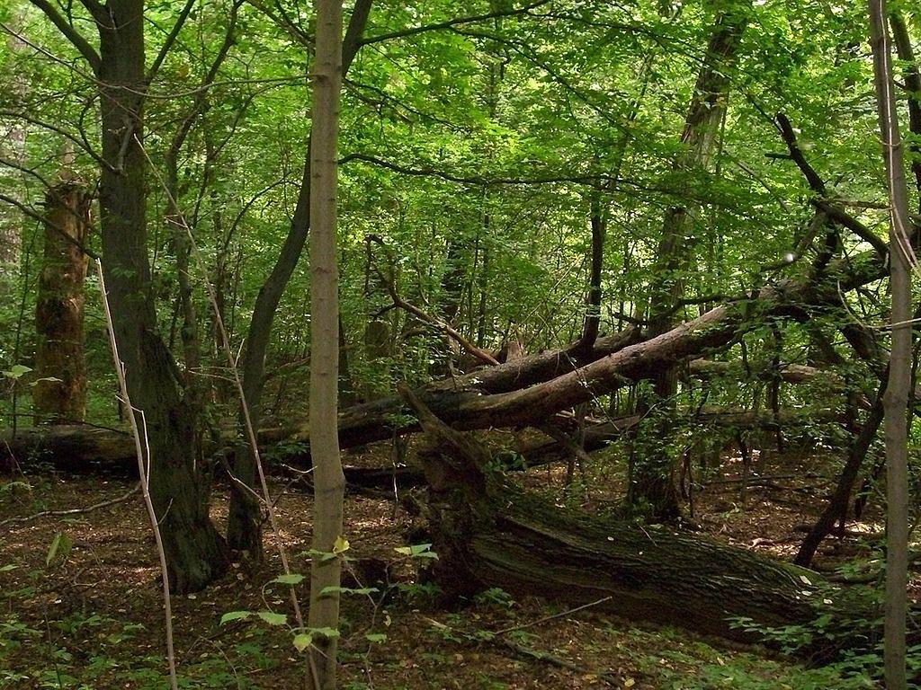 Szpital polowy powstaje w Lesie Bemowskim