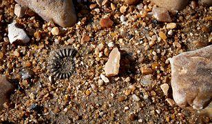 Naukowcy w Chinach odkryli skamieliny, które mają ponad pół miliarda lat