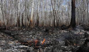 Mazowieckie. Pożary lasów i wypalanie traw coraz większym problemem (zdjęcie ilustracyjne).