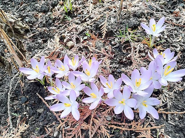 """""""Wiosna, ewidentnie"""". Czytelnicy WP dzielą się wrażeniami z pierwszego ciepłego dnia w tym roku"""