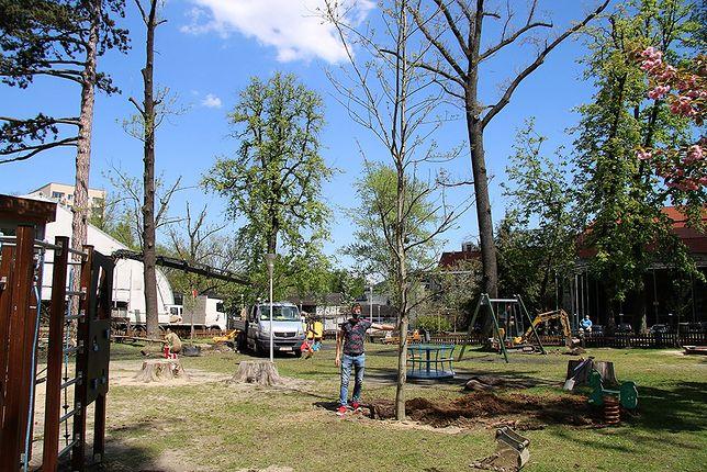 Śląskie. W Parku Słowackiego w Bielsku-Białej pracownicy magistratu zasadzili kilkanaście bardzo dużych drzew.