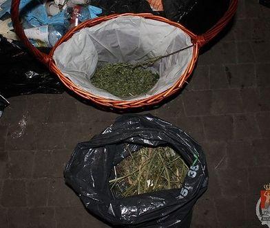 """Domowa fabryka narkotyków w Markach. """"Zabezpieczono pół kilograma"""""""