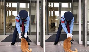 Najwytrwalsze koty świata. Od lat próbują wejść do muzeum