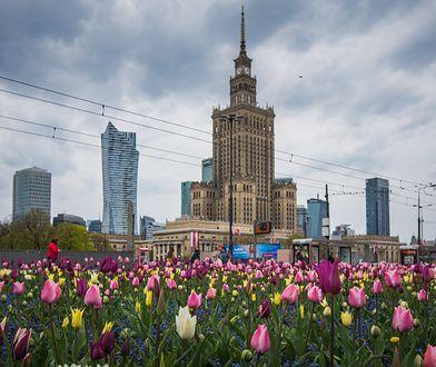 Warszawa w tulipanach. Stolicę zalało morze kwiatów [ZDJĘCIA]