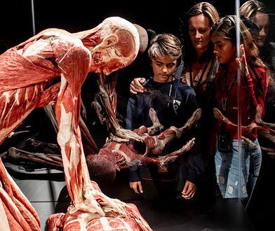 Body Worlds & The Cycle of Life jest zbiorem ponad 160 anatomicznych wzorców. Wystawa jest prezentowana w różnych zakątkach świata i budzi kontrowersje