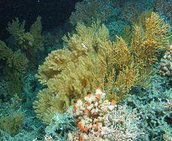 Niesamowite odkrycie w głębinach Oceanu Atlantyckiego