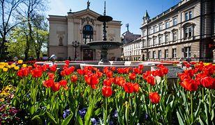 Bielsko-Biała. 30 tysięcy kwiatów odmieni miasto