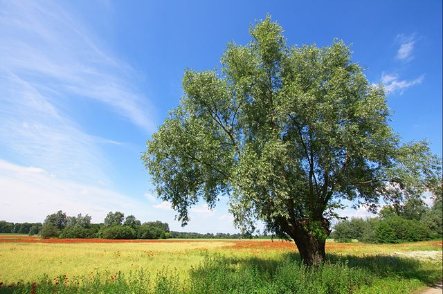 Pogoda na dziś — środa 31 lipca. Prognoza dla Warszawy, Gdańska, Wrocławia i innych. Sprawdź, gdzie będzie dziś burza, a gdzie zaświeci słońce