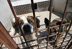 100 tys. zł kary za znęcanie się nad zwierzętami. PiS chce wprowadzić zmiany