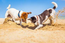 Odrobaczanie psa – dlaczego jest tak istotne?