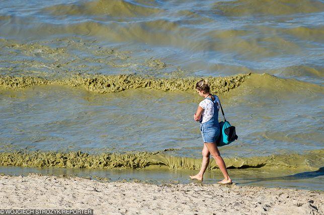 Sinice w Bałtyku. Plaże są już otwarte