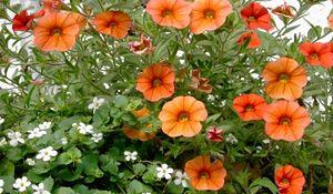 Najlepsze rośliny na balkon i taras. Są nie do zdarcia