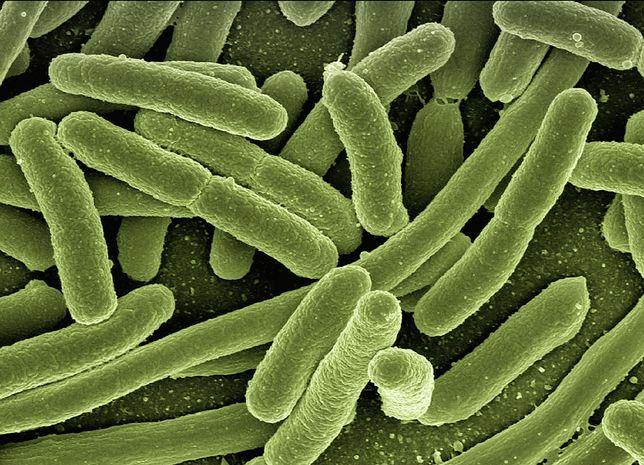 Polska. Superbakteria New Delhi. Rośnie liczba chorych [ZDJĘCIA]
