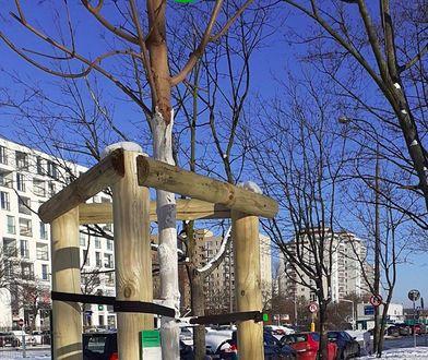 Drzewa Warszawy. Miło cię poznać, dębie, dobrze cię widzieć, sosno. Teraz wszystko jest na mapie