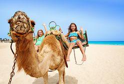 Miejsca na wakacje z dzieckiem godne polecenia