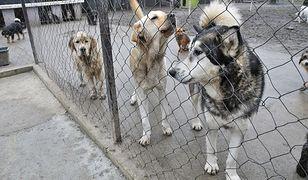 """Ponad setka psów przetrzymywana pod Drohiczynem. """"Mamy związane ręce"""""""