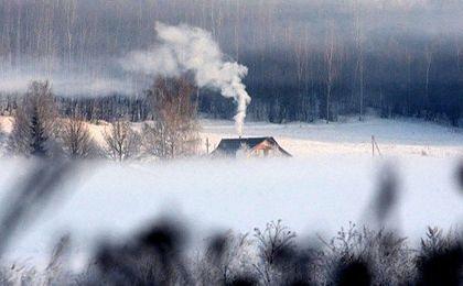 Smog w puszczy