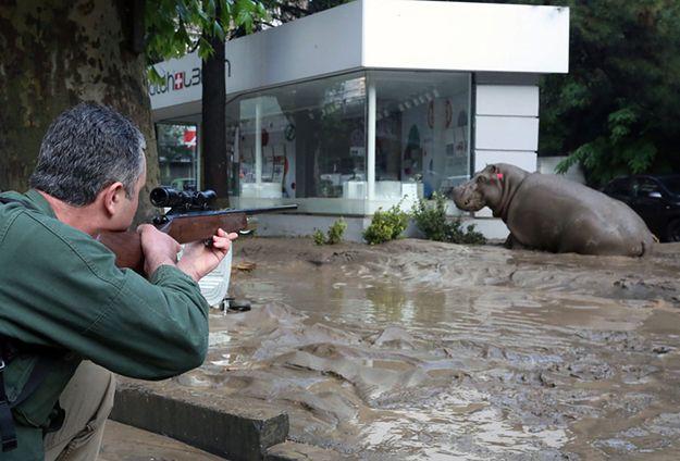 Doliczono się wszystkich drapieżników z zalanego zoo