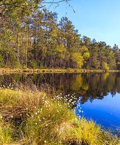 Lubuskie. Jezioro w kształcie serca. Nieznany cud natury