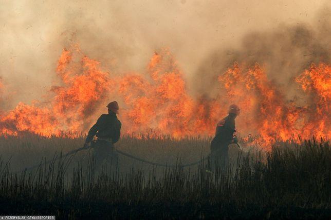 Ogromny pożar w Wielkopolsce. Płoną hektary zboża