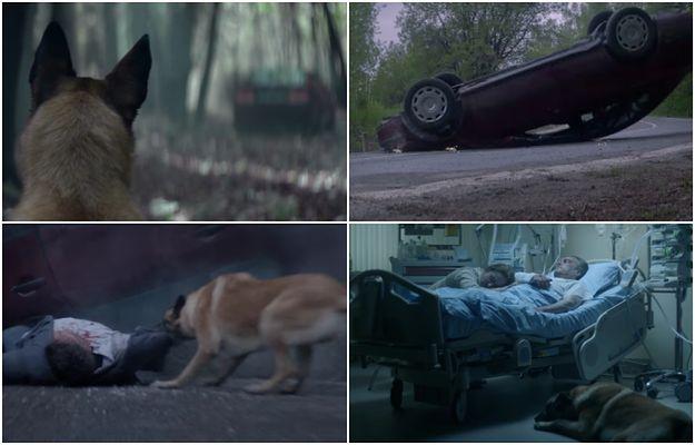 Wstrząsające wideo. Mężczyzna porzucił psa w lesie, a chwilę później miał wypadek. Zwierzę uratowało mu życie