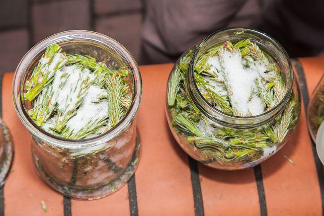 Z pędów sosny można przygotować syrop, nalewkę lub dżem