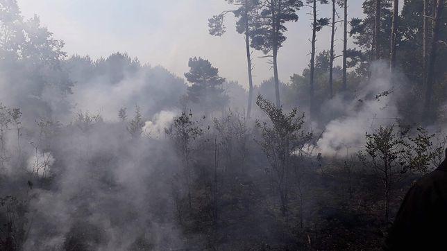 Koronawirus w Polsce. Kontrowersje wokół zakazu wstępu do lasów