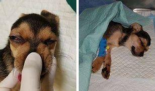 Toffik - pobity szczeniak walczy o życie