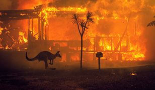 Pożary w Australii pochłonęły już blisko 1 mld zwierząt