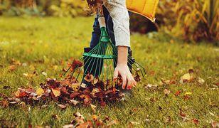 Parki rezygnują z grabienia liści