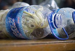 Indonezja. Koszmarny proceder. Papugi w plastikowych butelkach