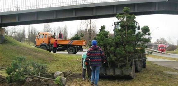 Sosnowiec. Ruszyły nasadzenia nowych drzew w mieście.