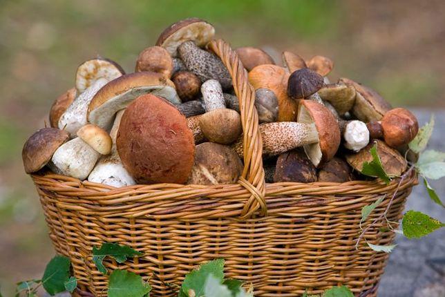 W tym roku grzyby są wyjątkowo drogie. Handlowcy mówią, że ceny podskoczyły o ponad 50 proc.