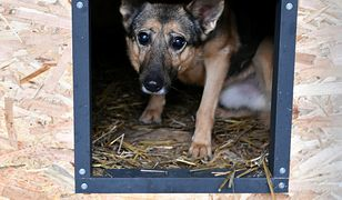 W schroniskach pełno jest zwierząt, które zostały porzucone przez właścicieli