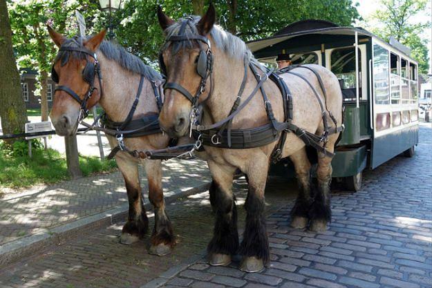Świebodzice: tramwaj konny powraca na Dolny Śląsk