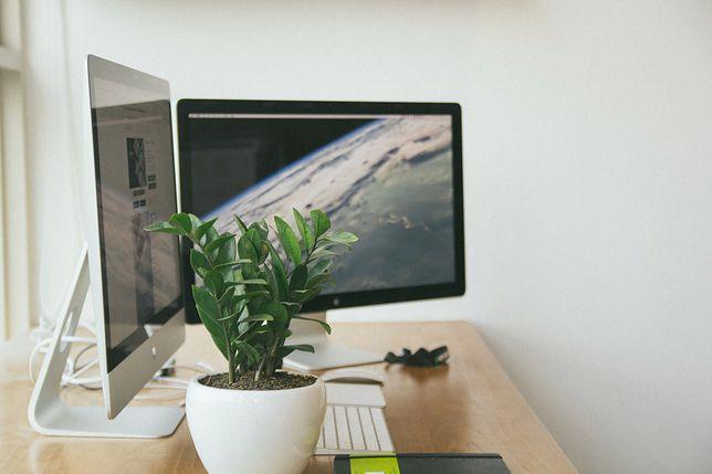 Wybierz monitor spośród wielu dostępnych modeli
