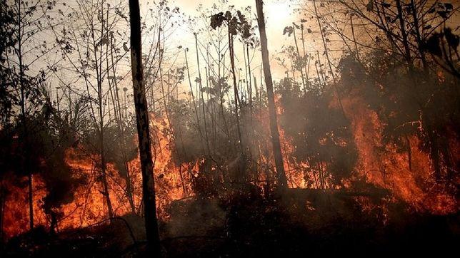 Amazonia. Pożary lasów nie pozbawią nas tlenu. Naukowcy tłumaczą dlaczego