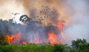 Amazonia otrzyma setki milionów dolarów. Do darczyńców dołączył Emmanuel Macron
