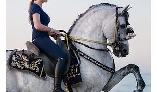 Konie.Pasja od pokoleń. Książka dla wszystkich, którzy kochają konie