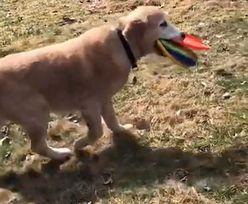 Pies zdobył serca internautów. Wideo jest hitem sieci