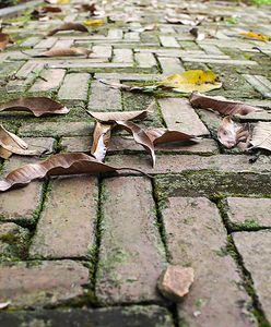 Jak czyścić chodnik przed domem? Szybko pozbędziesz się mchu i upartych plam