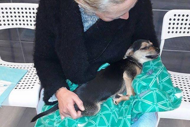 Od 5 dni trwa walka o życie 3-miesięcznego szczeniaka