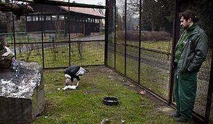 Opiekun ptaków w zoo