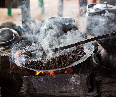 60 proc. gatunków dzikiej kawy jest zagrożonych wyginięciem. W tym najpopularniejsza - Arabica