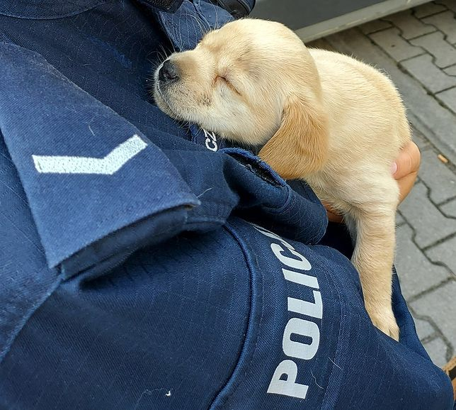 Kutno. Policjanci uratowali porzucone szczeniaki