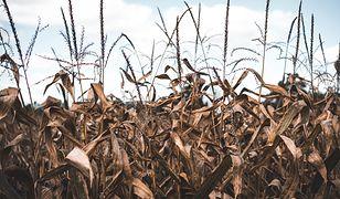 Czy mokry początek roku oznacza, że największy od lat kryzys suszy mamy za sobą? Niekoniecznie.