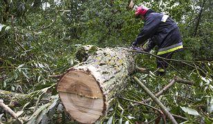 Halny przewracał drzewa. Są ranni